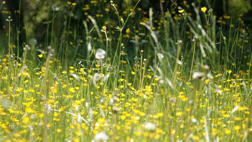 Wat te doen tegen hooikoortsklachten?